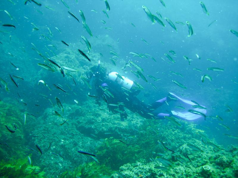 Rottness Dive-19
