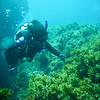 Rottness Dive-10