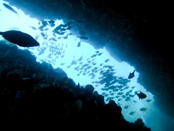 Rottness Dive-11