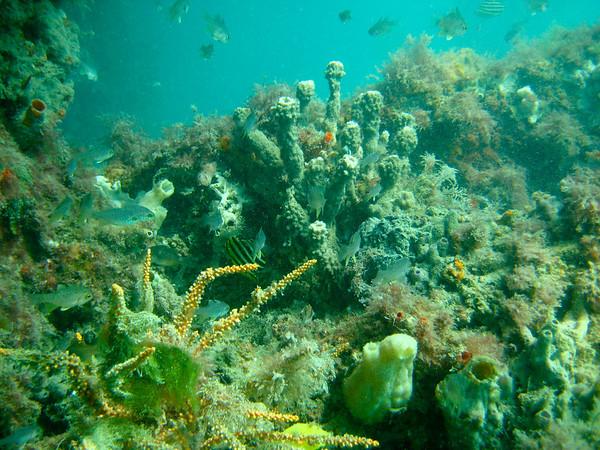 Woodman Point Mar08-26