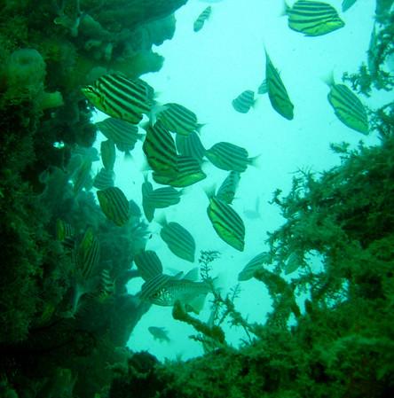 Woodman Point Mar08-6