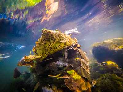 Even Fall underwater