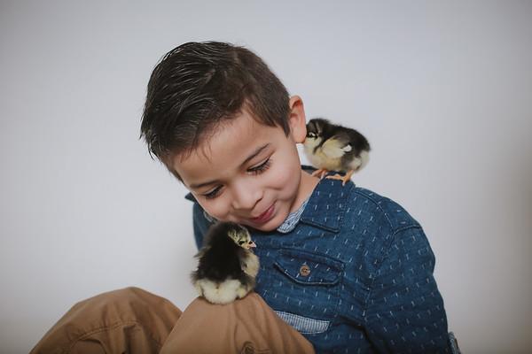 Sumara {Chicks 2018}