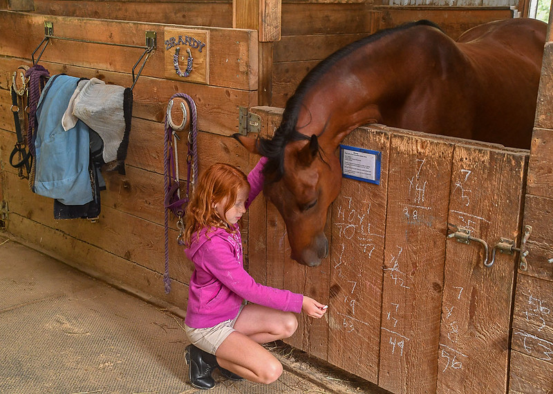 <span>My granddaughter practices math by chalking the 7 times table on Brandy's door.  Brandy watches in fascination.</span>