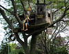 Kentucky Tree house
