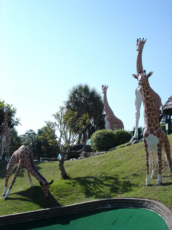 Giraffes at Jungle Lagoon.