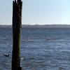 Seagull Sentry.