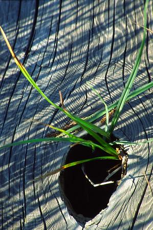 Blades of Grass.