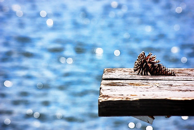 Pinecone on the Bench