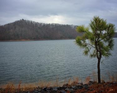 Tree on Lakeside