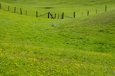 Pasture fenceline near Port Angeles, WA