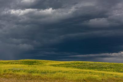 Sweet Clover, Montana Prairie