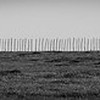 Fence Line, Central Texas