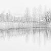 Reeds on Lake edge