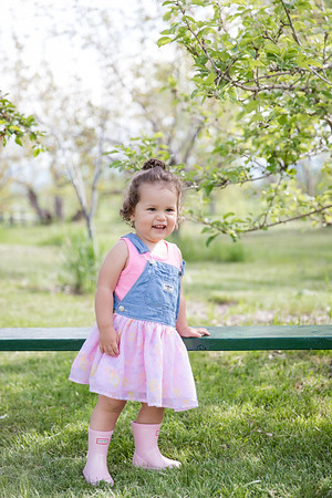 Apple Orchard-9