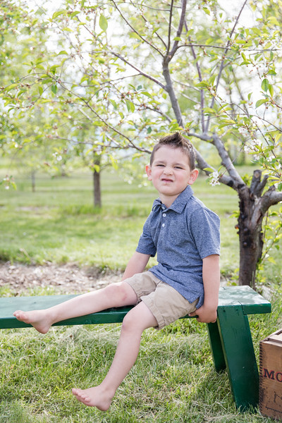 Apple Orchard-2