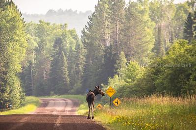 Moose Signs