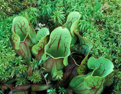 Picher Plant 001