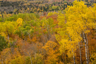 """AUTUMN 01629  """"A Cornucopia of Color""""  A nice variety of fall color blankets the hillside adjacent to Leveaux Mountain in Lutsen, MN."""