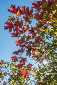 AUTUMN 06658  The leaves they are a-changin'  August 29, 2017 - Grand Portage, MN
