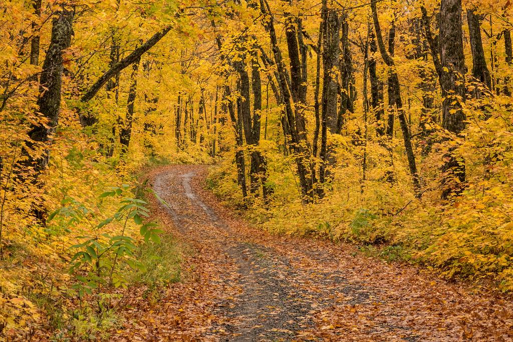 "AUTUMN 01728<br /> <br /> ""My Favorite Autumn Road""<br /> <br /> Rengo Road - Grand Portage, MN"