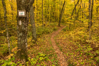 "AUTUMN 01596  ""The Spur to Leveaux Mountain""  Superior Hiking Trail near Lutsen, MN"