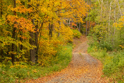 """Forest Road and Fall Colors"""