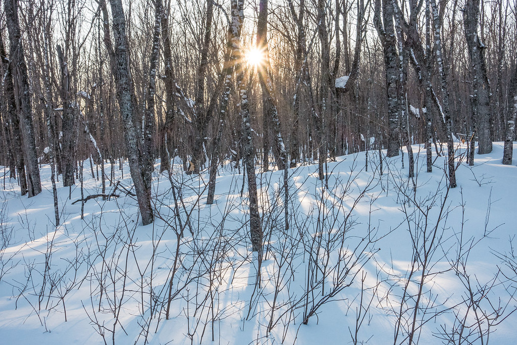 """FOREST 08812<br /> <br /> """"Almost time for Sugar Season!""""<br /> <br /> Early March in the Maple forest of Grand Portage, MN."""