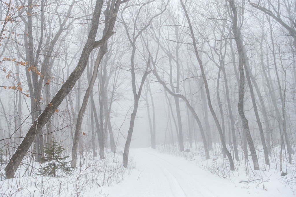 """FOREST 03897<br /> <br /> """"Foggy December Day in the Maple Forest""""<br /> <br /> Grand Portage, MN"""