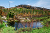 """FOREST 4684<br /> <br /> """"Two weeks later""""<br /> <br /> Two weeks after the Ham Lake Fire tore through this area, the forest was already showing lots of promise for new life.  Taken near the end of the Gunflint Trail in northeast Minnesota, in late May of 2007."""