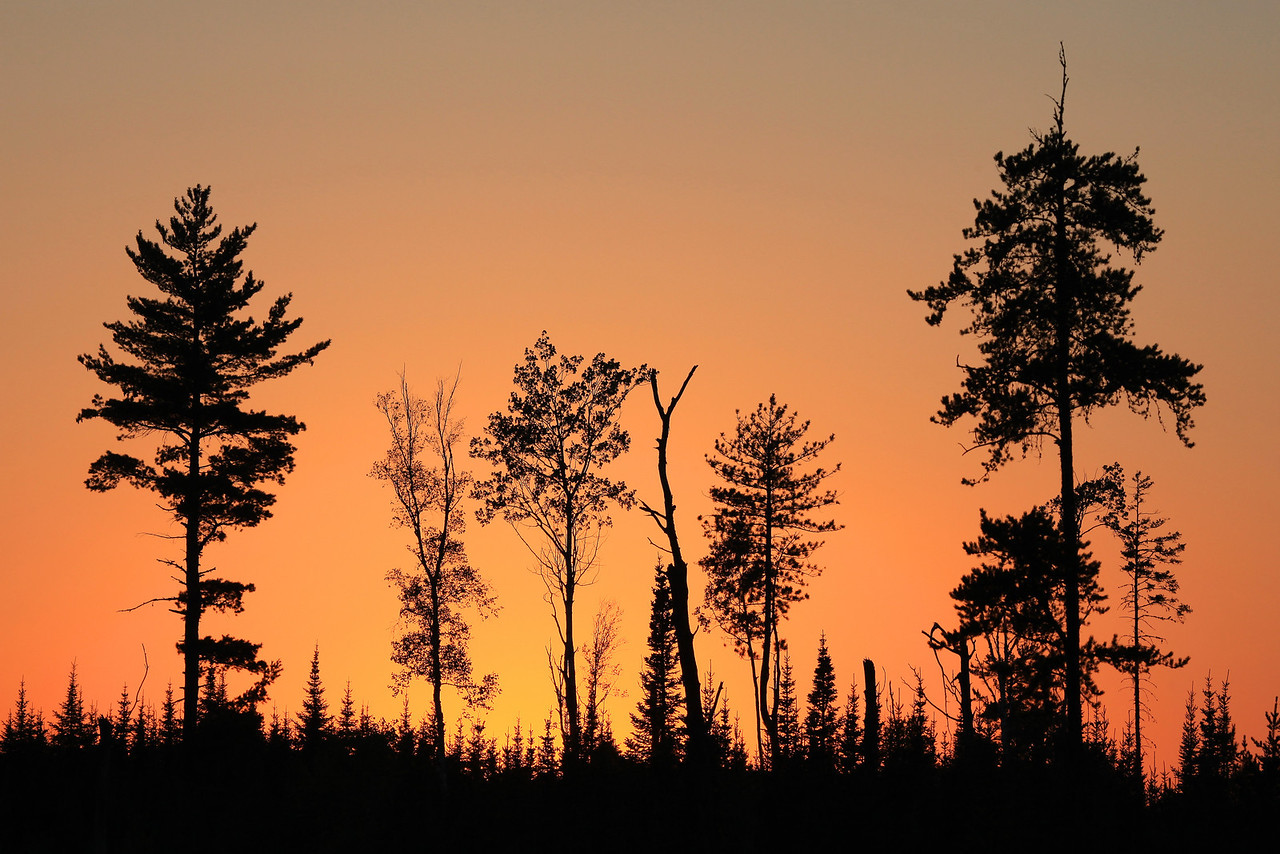 "FOREST 0178  ""Fire in the sky""  While driving down an old logging road off the Arrowhead Trail one evening, I came across this opening that had a grouping of trees that stood out nicely against the sky.  I was passing by right after the sun had gone down and the sky behind the trees was filled with this beautiful orange glow."