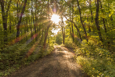 """FOREST 02361  """"Beautiful Sunlight on Rengo Road""""  Grand Portage, MN"""