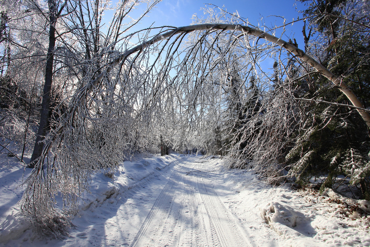 "FOREST 7086  ""Ice storm aftermath""  Trout Lake Road, Grand Portage Reservation"