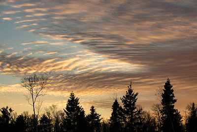 "FOREST 03190  ""November Sunset Sky"""