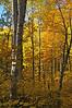 Nemadji State Forest Minnesota