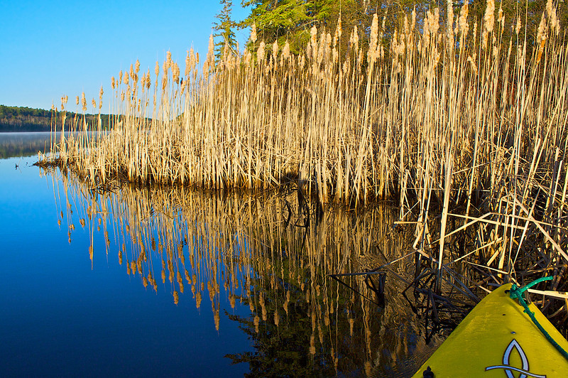 Island.. Bass Lake.. Superior National Forest.