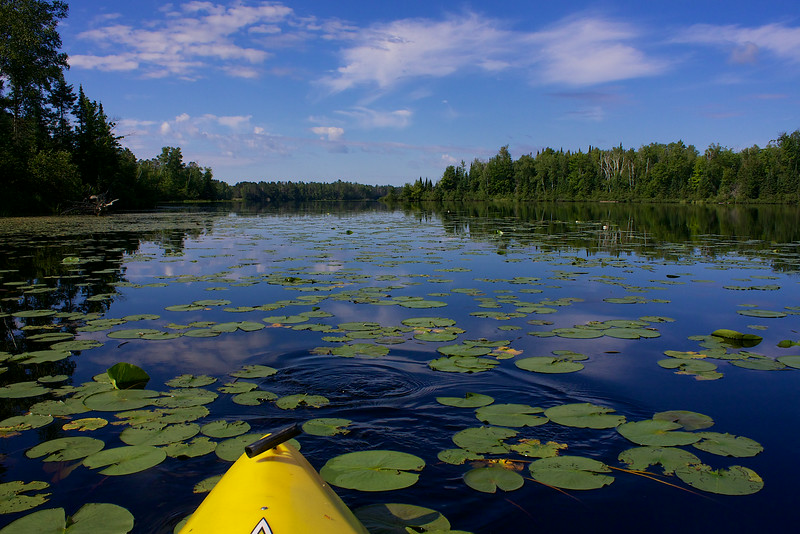 This is black lake in the Chequamegon-Nicolet National Forest. A fish went swimming out-of-the-way as I approached these lily pads.