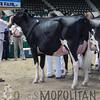 MN_SF_HolsteinCows15_ 026