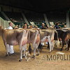 MN_SF_JerseyCows15_ 007