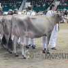 MN_SF_JerseyCows15_ 016