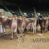 MN_SF_JerseyCows15_ 008