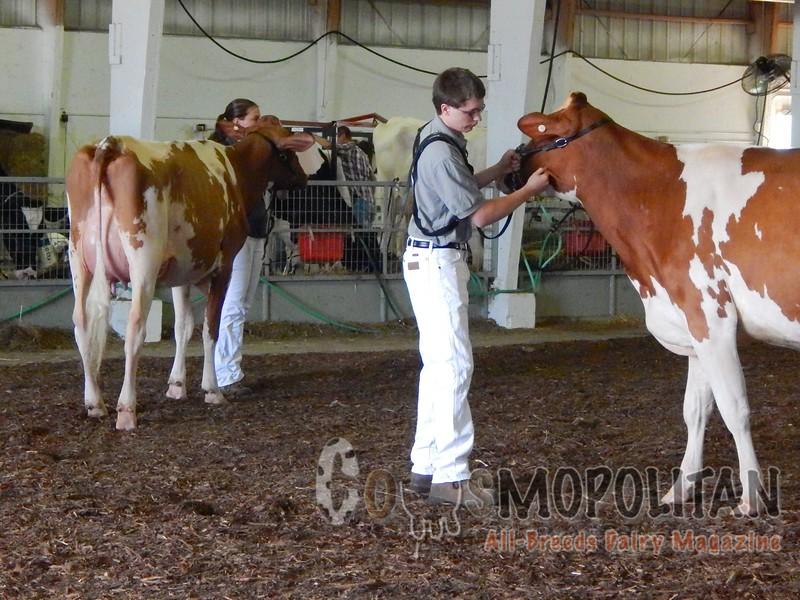 Minnesota State Holstein Shows 2016