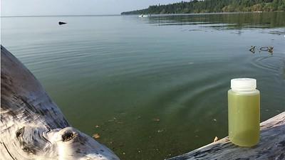 Algae on Lake Superior