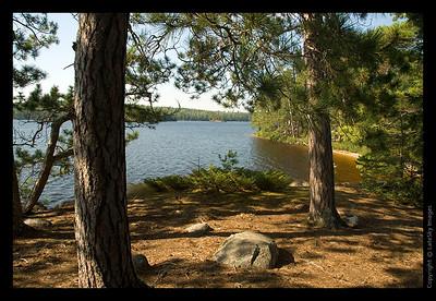 194T Lake View Through Pines