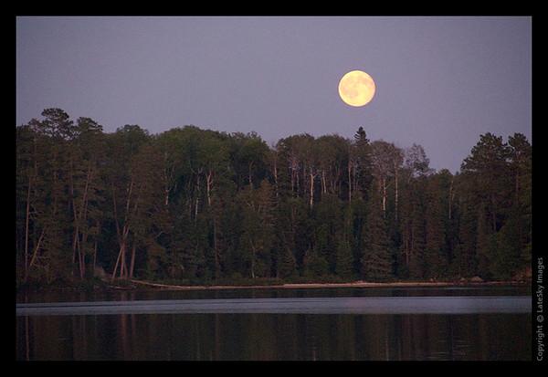 220 Moonrise over Treetops