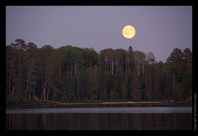220 Moonrise over Treetops