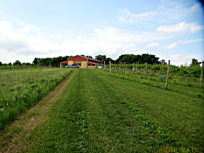 https://minnesotagrown.com/member/eagleview-winery/  http://www.minnesotauncorked.com/eagleview-winery-ashby/