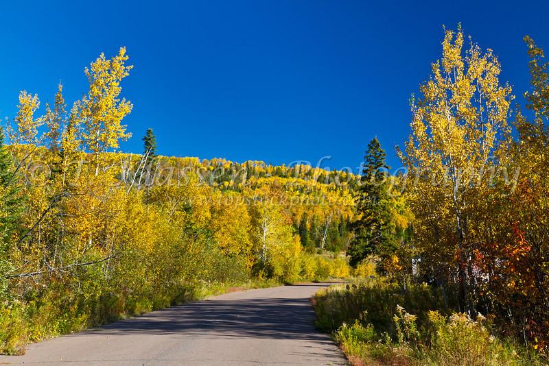 Fall foliage color along the Gunflint Trail near Grand Marais, Minnesota, USA.