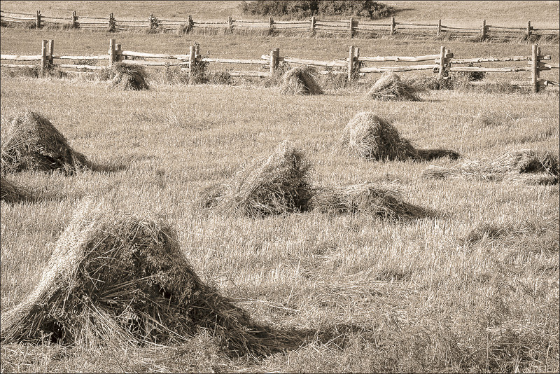 <font size=+2>Harvested Oats</font>  Oliver H. Kelley Farm Minnesota Historical Society Elk River, Minnesota <font size=-2>(2-13160)</font>