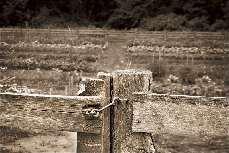 <font size=+2>Gate Fence</font>  Oliver H. Kelley Farm Minnesota Historical Society Elk River, Minnesota <font size=-2>(3-22163)</font>